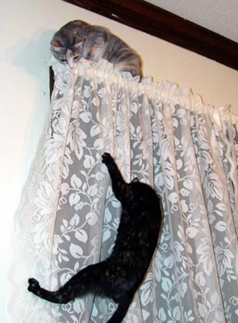 Коты на шторах